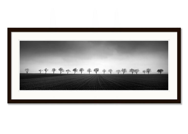 Nineteen Trees, Austria - Black and White Analog Fine Art Landscape Photography For Sale 3