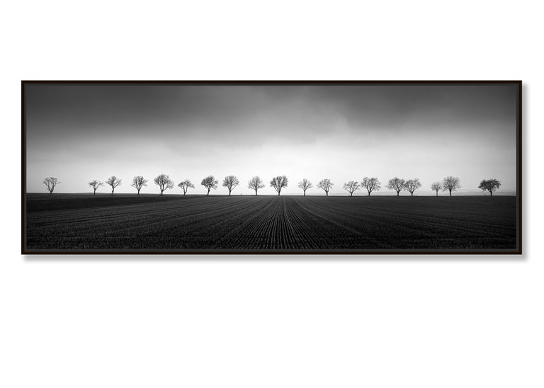 Nineteen Trees, Austria - Black and White Analog Fine Art Landscape Photography For Sale 1