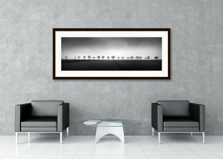 Nineteen Trees, Austria - Black and White Analog Fine Art Landscape Photography For Sale 4