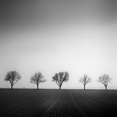 Cherry Tree Avenue 1, Austria - Black & White Fine Art Landscape Photography