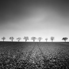 Nine Cherry Trees 1, Austria - Black and White Fine Art Landscape Photography