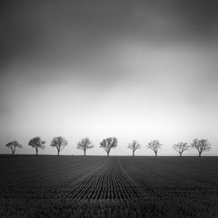 Nine Cherry Trees 2, Austria - Black and White Fine Art Landscape Photography