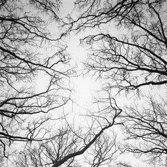 Chestnut Trees, Versailles, Paris, black and white photography, landscapes