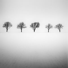 Five Trees in snowy Field, Austria, black and white fine photography, landscape