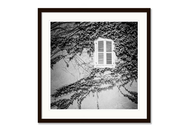 Hedera Helix, France - Black and White Analog Fine Art Romantic Film Photography For Sale 1
