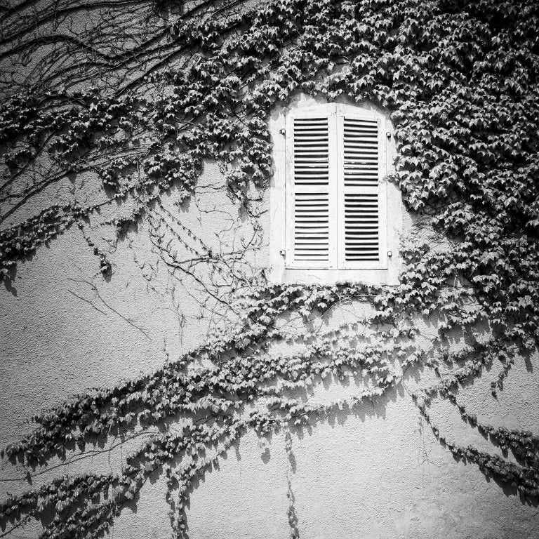 Gerald Berghammer Landscape Photograph - Hedera Helix, France - Black and White Analog Fine Art Romantic Film Photography