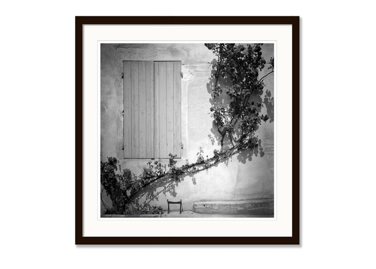 Rosa Wichuraiana, France - Black and White Fine Art Romantic Film Photography For Sale 1