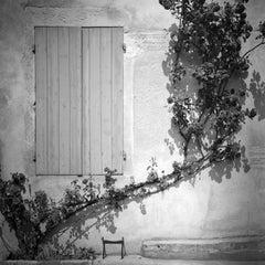 Rosa Wichuraiana, France - Black and White Fine Art Romantic Film Photography