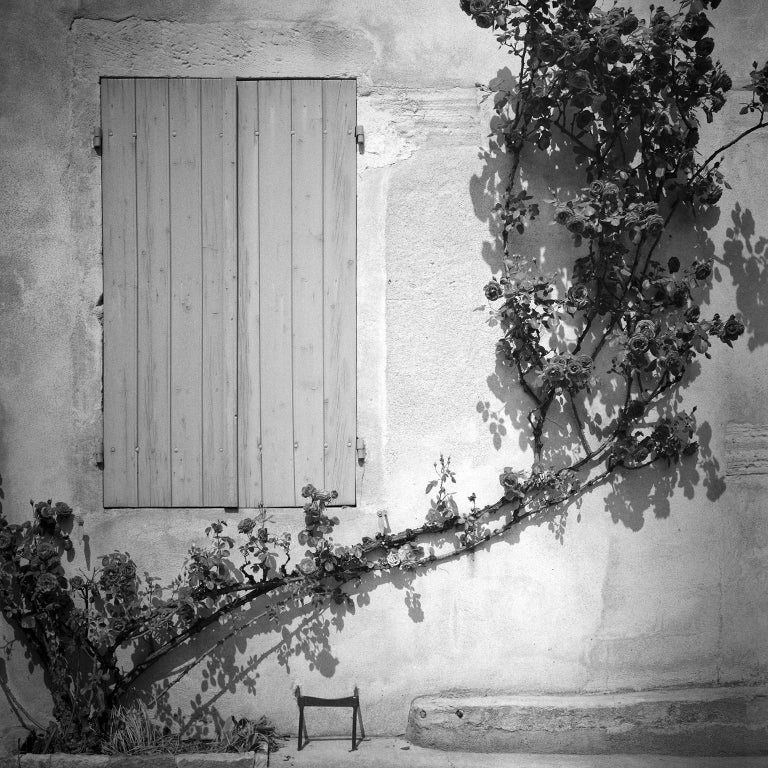 Gerald Berghammer Black and White Photograph - Rosa Wichuraiana, France - Black and White Fine Art Romantic Film Photography