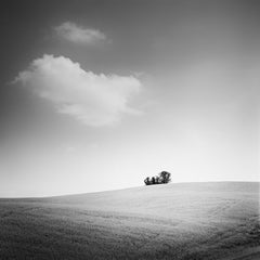 Little Forest, Tuscany, Italy, contemporary black and white images, landscape