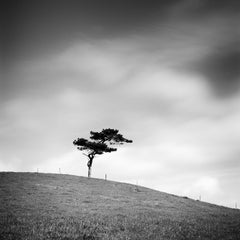 Beware of the Bull, Single Tree Ireland, black and white photography, landscapes