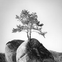 Tree on the Rock, Austria, minimalist black and white landscape art photography