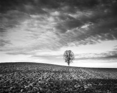 Lonely Tree, Austria - Analogue Black and White Landscapes - Trees Fine Arts