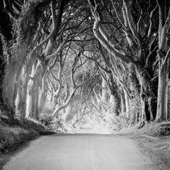Dark Hedges, Ireland, beech tree avenue, black and white photography, landscape