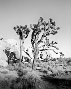 Joshua Tree national park, California, black and white photography, landscapes