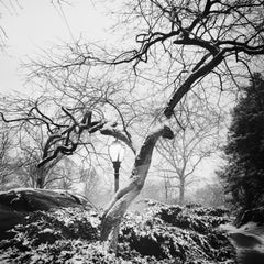 Snow covered Central Park, New York, USA, black and white photography cityscapes
