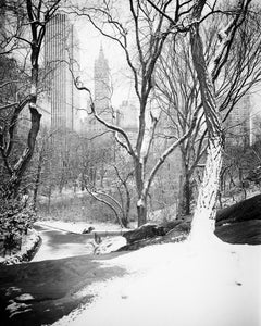 Snow covered Central Park, New York, black and white photography, landscapes