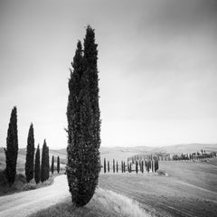 Cypress Trees, Tuscany, Italy, black and white photography, fine art landscape