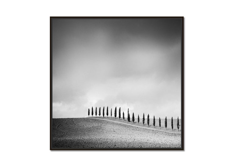 Row of Cypress Trees, Tuscany, Italy, black and white photography, landscapes - Photograph by Gerald Berghammer