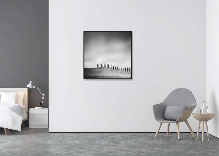 Row of Cypress Trees, Tuscany, Italy, black and white photography, landscapes - Contemporary Photograph by Gerald Berghammer