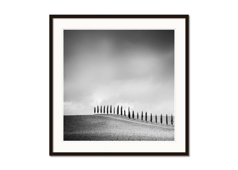 Row of Cypress Trees, Tuscany, Italy, black and white photography, landscapes - Gray Landscape Photograph by Gerald Berghammer