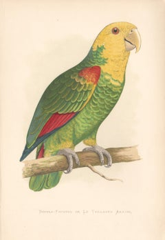 A series of three Amazon Parrot Chromolithographs, 1889