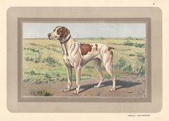 Braque Saint-Germain, French hound, dog chromolithograph, 1930s