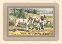 Chiens de Porcelaine, French hound, dog chromolithograph, 1930s