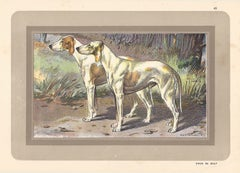 Chien de Billy, French hound, dog chromolithograph, 1930s