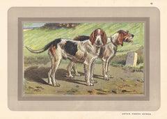 Griffons Vendeens Nivernais, French hound, dog chromolithograph, 1930s