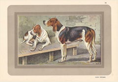 Chien Normand, French hound, dog chromolithograph, 1930s