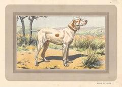 Braque de l'Ariege, French hound, dog chromolithograph, 1930s