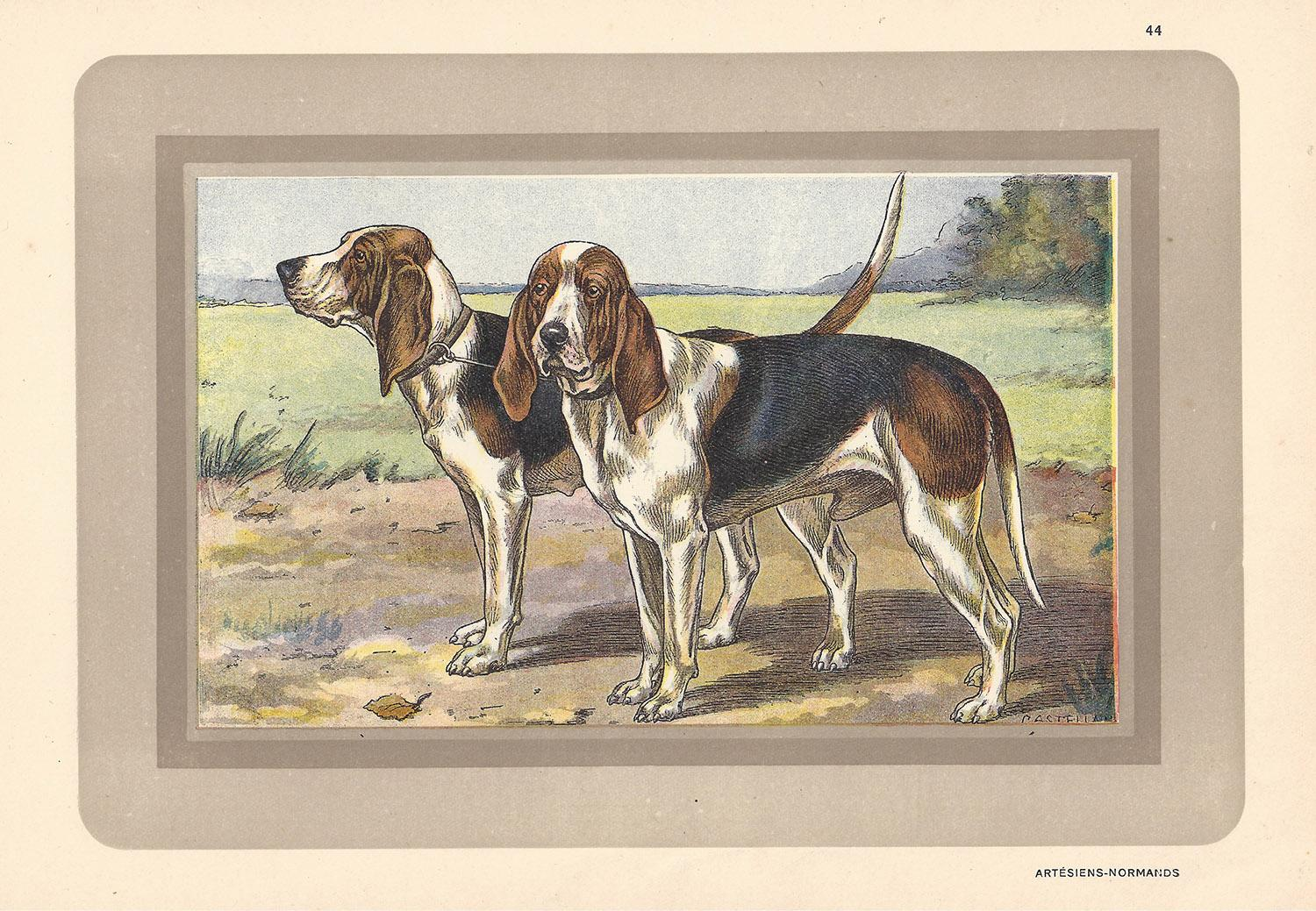 Artesiens Normands- Norman Artesian Bassets, French dog chromolithograph, 1930s