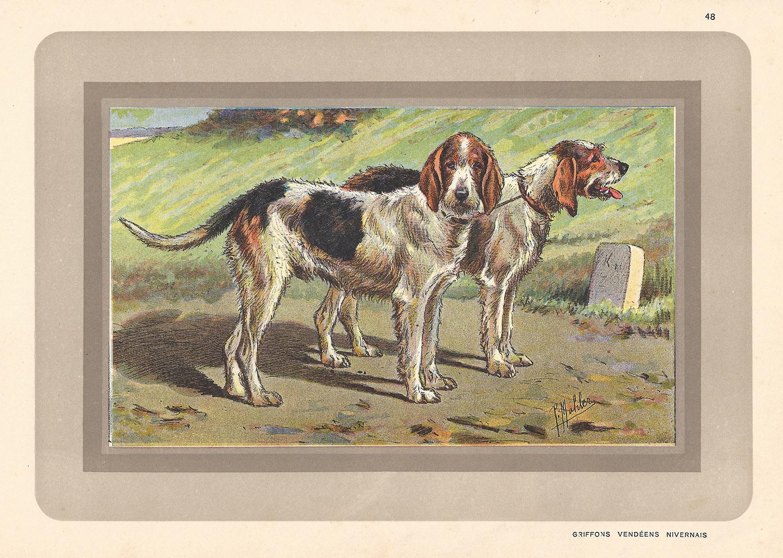 Griffon Vendeens Nivernais, French hound, dog chromolithograph, 1930s
