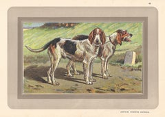 Griffon Vendeens Nivernais, French hound, dog chromolithograph, 1930s
