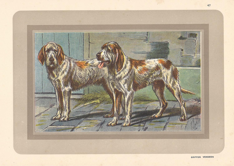 Griffon Vendeens, French hound, dog chromolithograph, 1930s