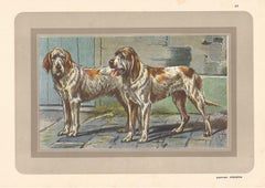 Griffon Vendeens, French hound, dog chromolithograph, 1930s