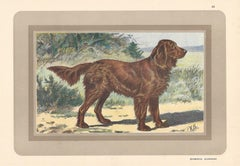 Epagneul Allemand - German Spaniel, French hound, dog chromolithograph, 1930s