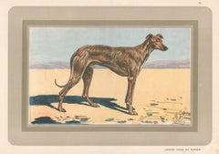 Arab Greyhound or Saluki, French hound, dog chromolithograph, 1930s