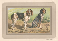 Briquets Suisses, French hound, dog chromolithograph, 1930s
