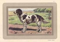 Epagneul Francais - French Spaniel, French hound, dog chromolithograph, 1930s