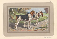 Batard Anglo-Normand, French hound, dog chromolithograph, 1930s