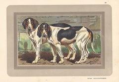 Batard Anglo-Saintongeois, French hound, dog chromolithograph, 1930s