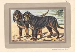 Otterhound Ou Chien Pour Loutres, French hound, dog chromolithograph, 1930s