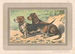 Rough Coated Dachshund, French hound, dog chromolithograph, 1930s