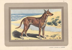Charnigue, French hound, dog chromolithograph, 1930s