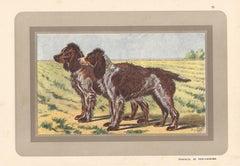 Epagneul de Pont-Audemer, Spaniel, French hound, dog chromolithograph, 1930s