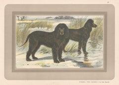 Irish Water Spaniel, French hound, dog chromolithograph, 1930s