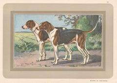 Batards Du Haut-Poitou, French hound, dog chromolithograph, 1930s