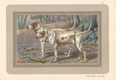 Chien Vendeen a Poil Ras, French hound, dog chromolithograph, 1930s